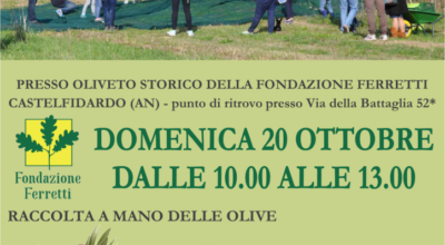 Raccolta delle olive e laboratori alla Fondazione Ferretti