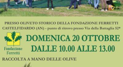 Raccolta-olive-2019-724×1024