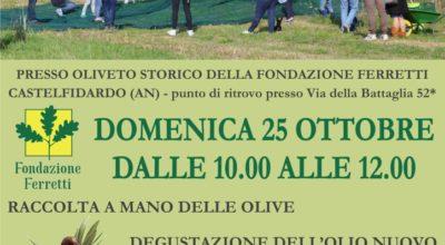 Raccolta delle olive alla fondazione Ferretti