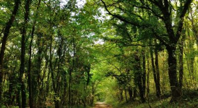 Selva di Castelfidardo